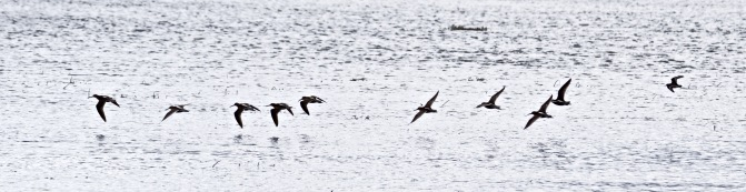 Birds take flight over the Moose River.