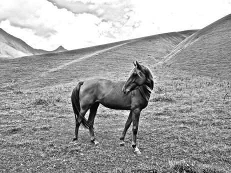 Horse of Juta
