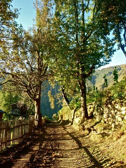 A village road in Adjara, Georgia