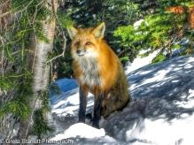 Fox6 copy