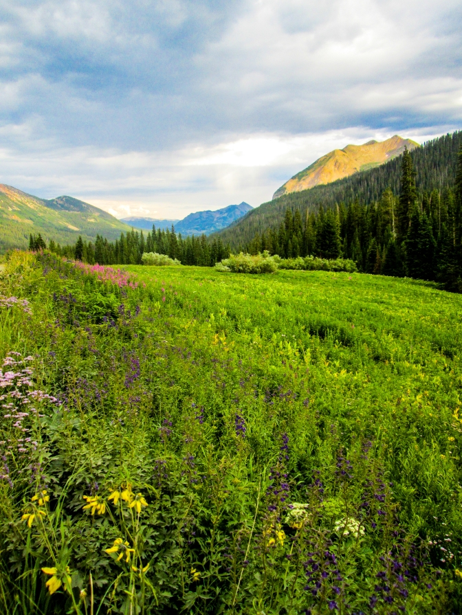 Wildflowers and Mountains copy
